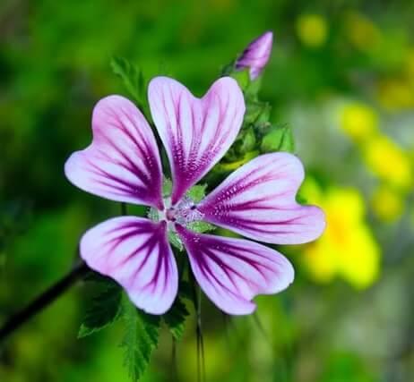 Quelle est la meilleure exposition pour les plantes du jardin ?