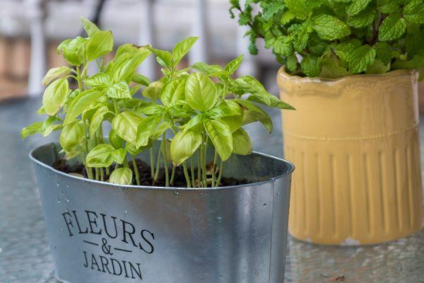 Comment créer une jardinière d'intérieur avec des herbes aromatiques ?