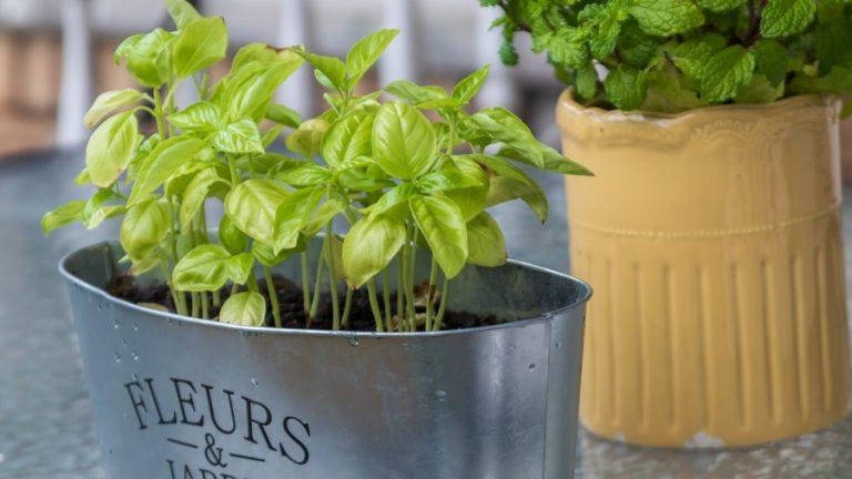 jardinière d'intérieur d'herbes aromatiques
