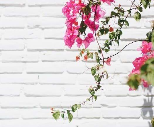 Mur extérieur au soleil avec une décoration florale
