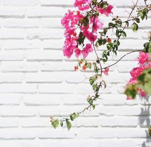 Décoration murale: comment embellir un mur extérieur au soleil?