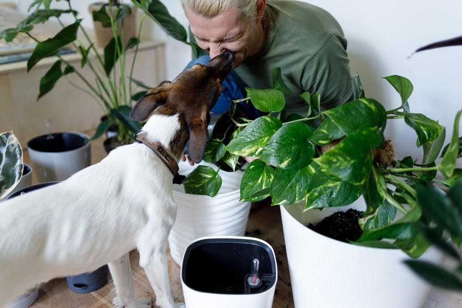 chien avec son maitre sur le balcon entouré de plantes