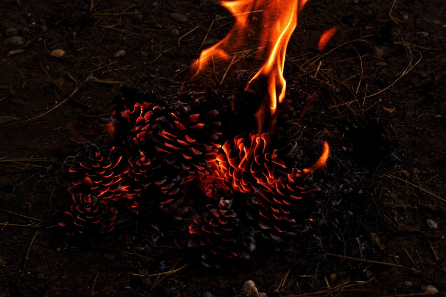 cones de pin en feu