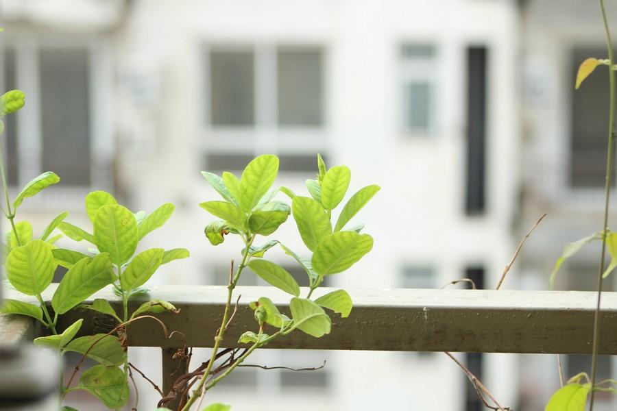 feuilles sur un balcon