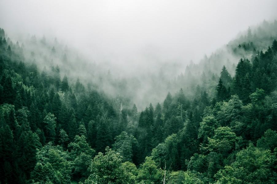 forêt avec des arbres