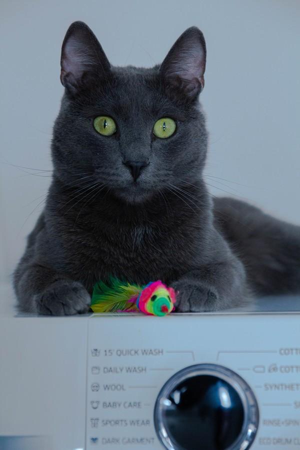 chat posé sur une machine à laver